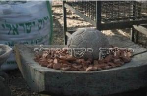 אביזרים לגינה ירוק ישראלי