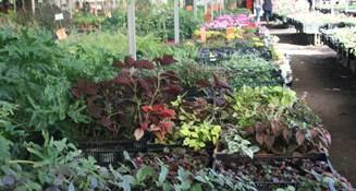 משתלות-צמחים-ירוק-ישראלי