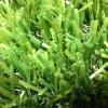 דשא סינטטי – מילאנו P