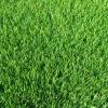 דשא סינטטי – סי ג'י