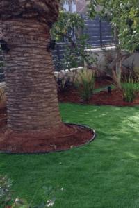 תוחם דשא
