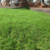 דשא סינטטי – אלכסנדר, ירוק ישראלי