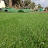 דשא סינטטי – יתרונות ועמידות