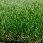 דשא סינטטי סי ג'י