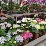 מבחר הצמחים בירוק ישראלי