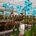 צלום קרוב של הפרחים בירוק ישראלי